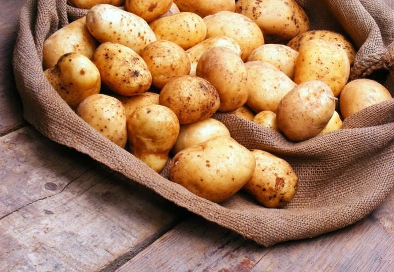 Семена картофеля не требуют особых условий хранения, долго сохраняют всхожесть и не занимают много места