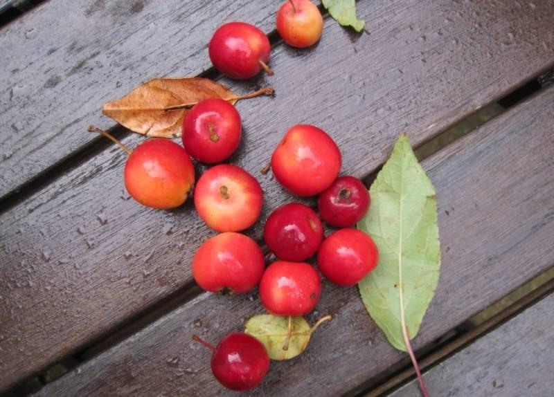 Любимые яблоки советской детворы, не теряющие своей популярности и по сей день, - легендарные ранетки