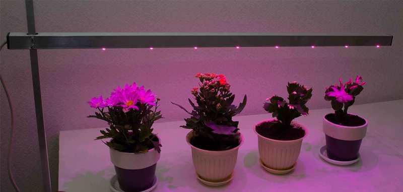 Для цветущих растений такого света достаточно