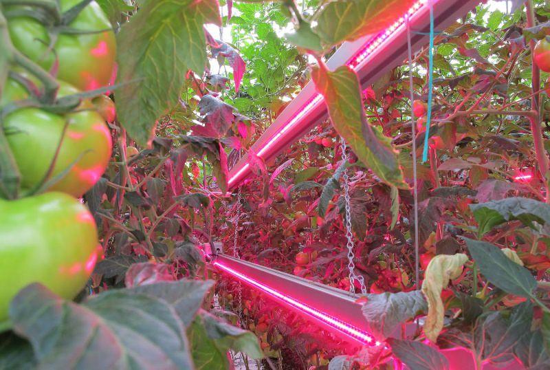 Светодиодный светильник может прослужить приблизительно 10 лет