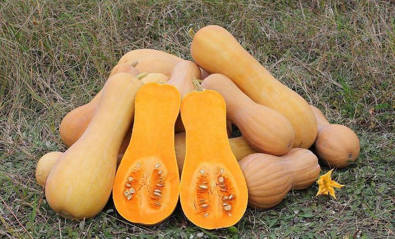 Лучше всего приобретать плоды тыквы среднего размера, вес которых находится в пределах 5 кг