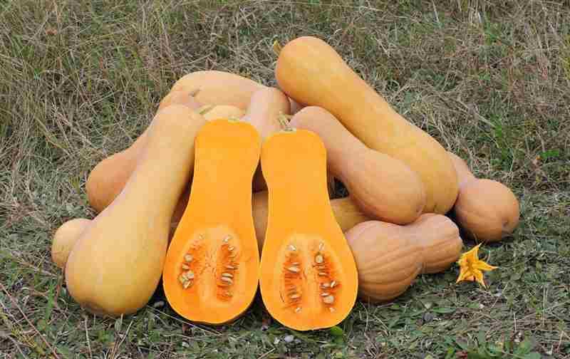 Плод имеет твердую и гладкую плодоножку, расширенную к основанию