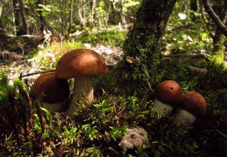 В природе существует большое количество разновидностей грибов