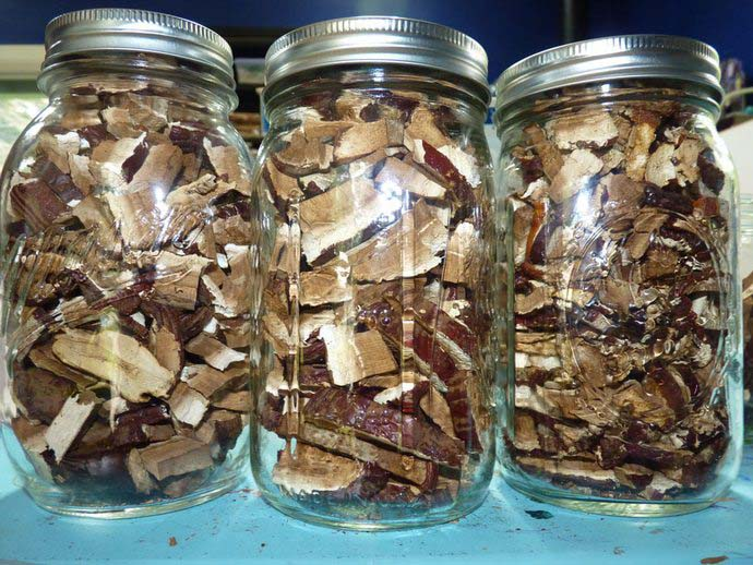 Собранные грибы нужно хорошо высушить, измельчить, разложить в стеклянные банки и плотно закрыть