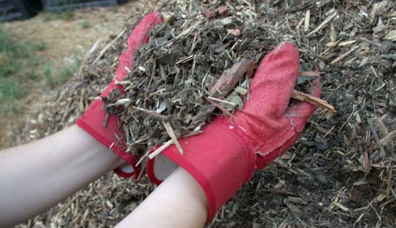 Сохранить влагу в почве поможет мульчирование её дополнительными материалами