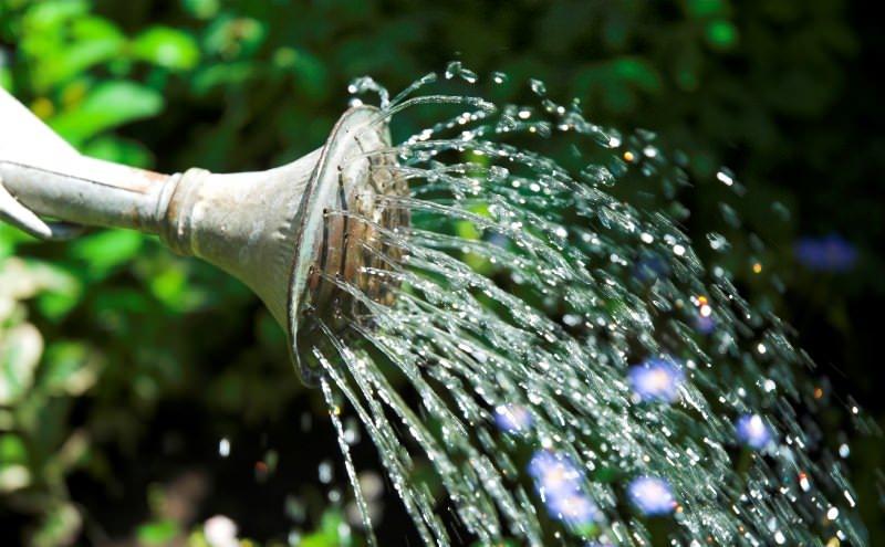 Уход за перцем Винни-Пух включает в себя регулярный полив и внесение удобрений