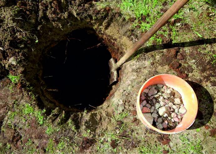 Очень важно правильно подобрать место для выращивания груши и грамотно подготовить посадочную яму