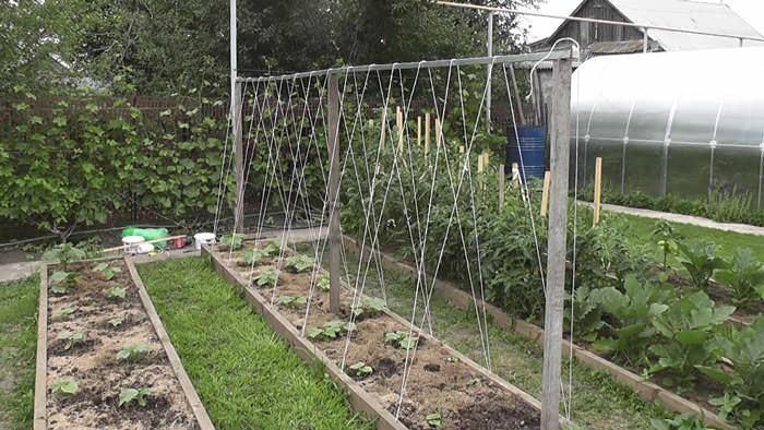 Принцип работы устройства прост: вьющееся растение цепляется за опору и ползет вверх