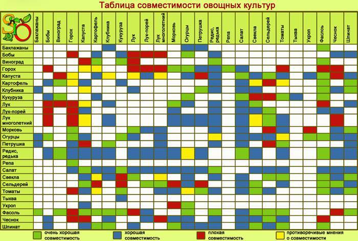Избежать ошибки, которые типичны для размещения овощных культур в теплице, позволяет заблаговременное планирование всех посадок