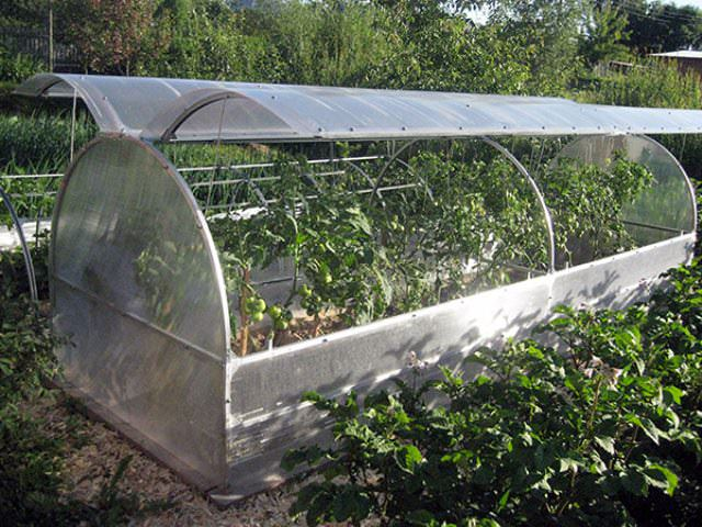 Откидные вверх скаты позволяют вести уход за растениями по всей теплице без внутренних проходов, что делает всю площадь теплицы полезной, т.е. занятой растениями