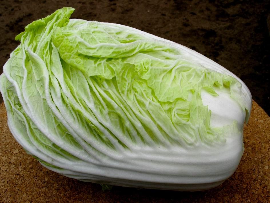 Кочанная форма пекинской капусты созревает быстрее других сортов