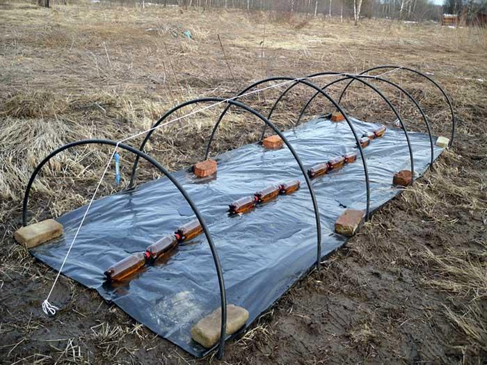 Начинать сеять томаты в тепличный грунт можно в первых числах марта. Посадку нужно осуществлять по определенным правилам