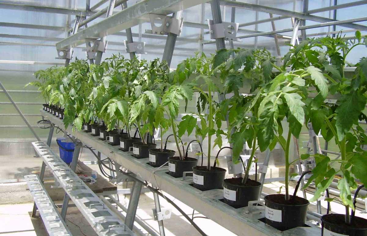 Выбирая фермерские строения, следует ориентироваться на тип растений, производство которых вы предполагаете вести