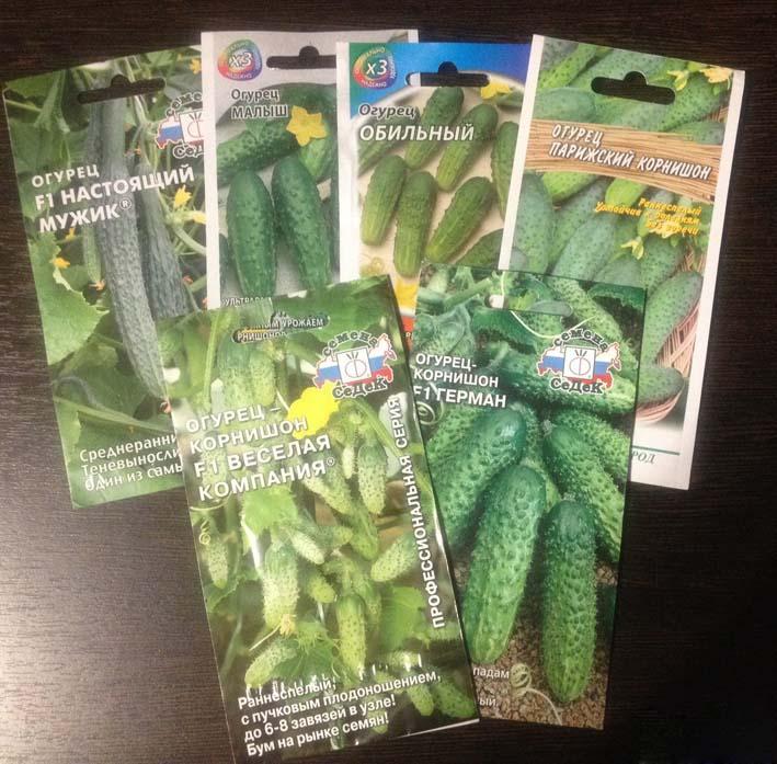 Много мужских цветов чаще всего образуется в результате высадки обычных сортовых огурцов, вот почему опытные огородники отдают предпочтение гибридным огурцам