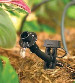 Самым правильным является своевременный полив растений через определённый временной промежуток
