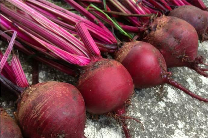 Свекла «Пабло f1» высоко оценивается за стабильную урожайность