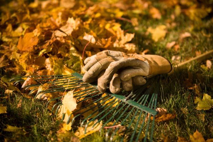 Середина октября – удачное время для проведения мероприятий по улучшению качественного состава почвы