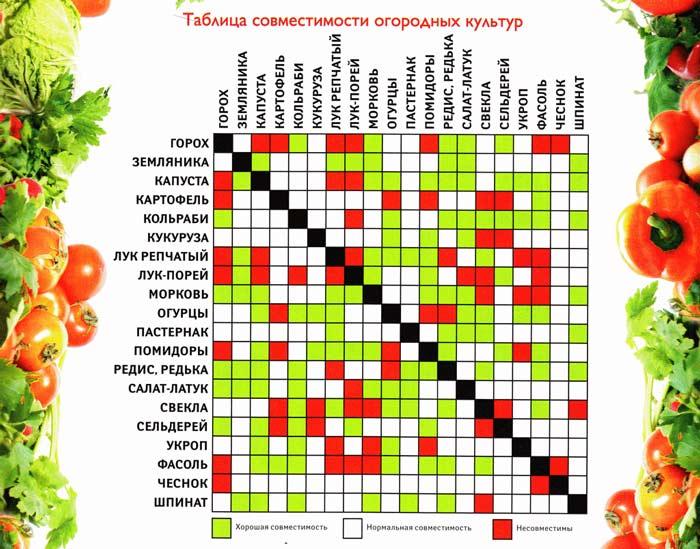 Технология выращивания овощей подразумевает грамотное сочетание различных культур. Разным растениям требуется разный уровень влажности, состав почвы, температура