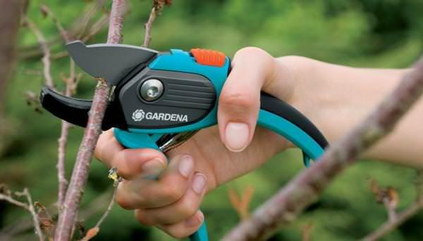 Садовые насаждения в ноябре также требуют внимания