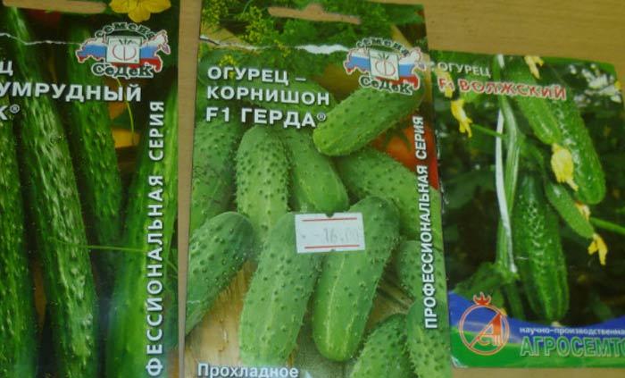 Самые популярные сорта огурцов для теплицы известны большинству огородников