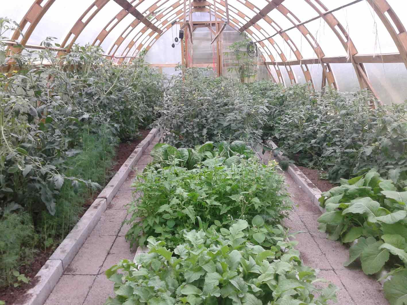 Отапливаемая теплица – оптимальный вариант конструкции для тропических растений и огородных культур, нуждающихся в постоянном контроле роста и развития, а также особенных температурных показателях и параметрах влажности