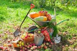 Главной заботой огородников в сентябре становится сбор урожая