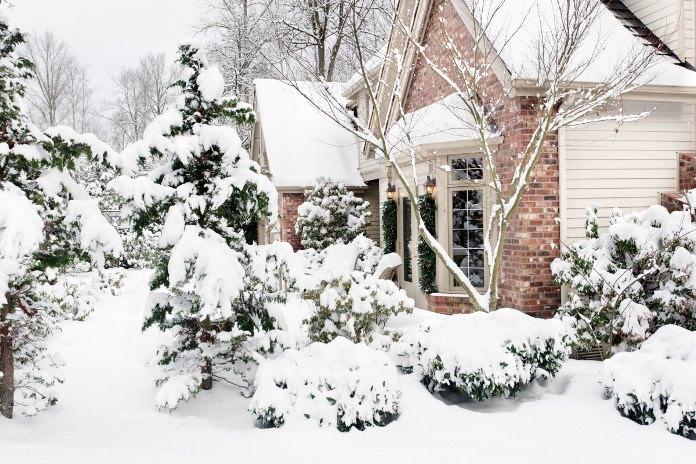 В январе очень важно провести осмотр садовых насаждений с целью выявления поврежденных ветвей, которые следует удалить
