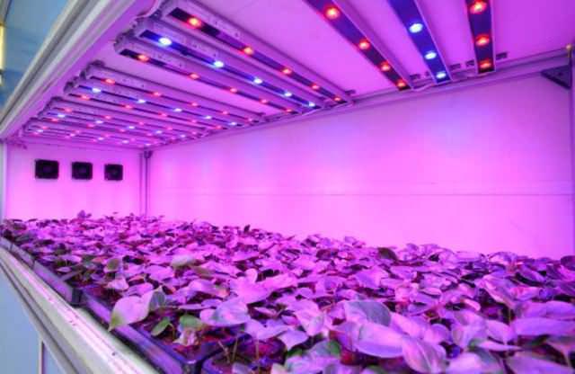 Отсутствие сильного нагрева при эксплуатации как у ламп накаливания, что облегчает процесс поддержания требуемого климата внутри теплицы