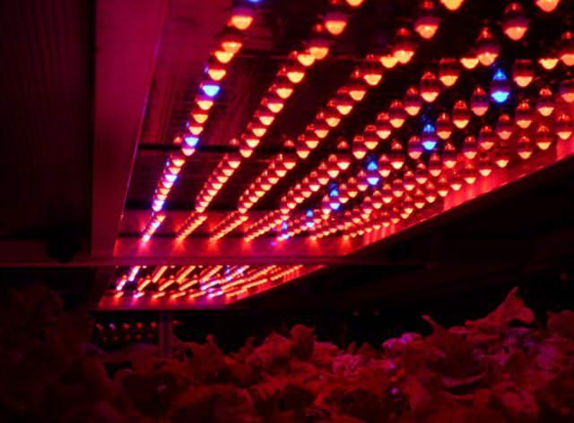 Светодиодные лампы практически незаменимы для выращивания рассады