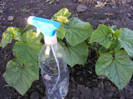 В арсенале каждого огородника должен быть не только набор современных химических препаратов для борьбы с основными вредителями тепличных овощных культур, но и знание народных и биологических методов защиты