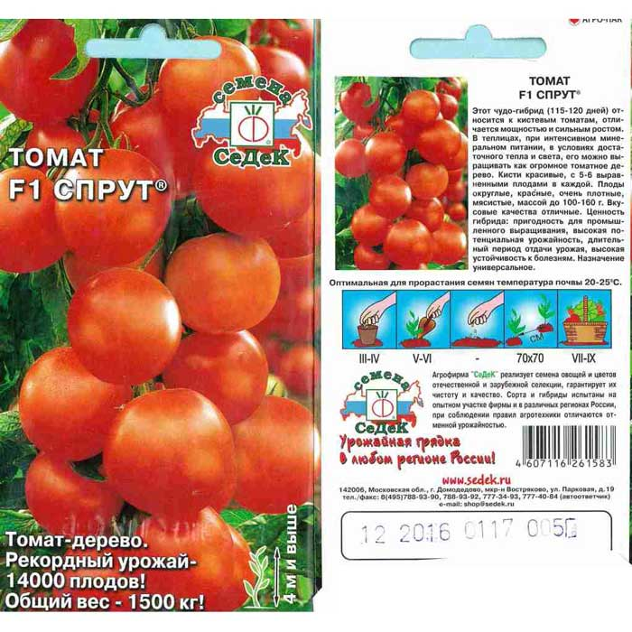 Сорт томатов «Спрут» отличается целым рядом преимуществ