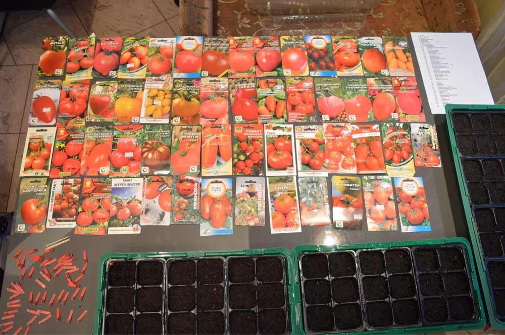 После того как огородник определился с выбором сорта томатов по фото или рекомендациям опытных дачников, наступает время подготовки семян к посеву, выполнять который следует максимально правильно и с соблюдением сроков