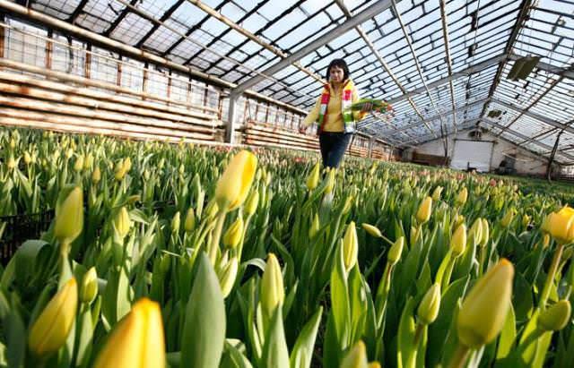 Требуется не менее 6 часов в день освещать растение, тогда оно быстро пойдет в рост