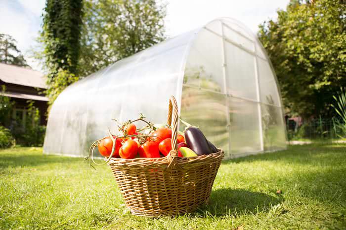 Теплица «Урожай» поддерживает оптимальный микроклимат для роста культур