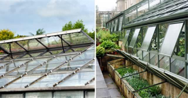 Грамотно выполненная вентиляция поможет выращивать даже экзотические растения