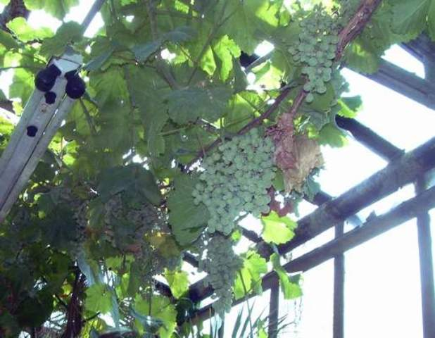 Полезно сочетать полив с внесением удобрений
