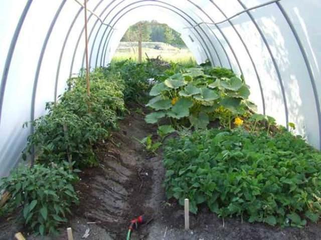 Подогрев почвы уменьшает сроки вегетации растений и поднимает их урожайность