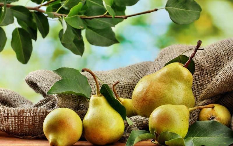 Максимальная продолжительность хранения собранного урожая сорта Чижовская достигает трех−четырех месяцев