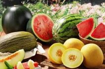 Как вырастить арбузы и дыни в открытом грунте