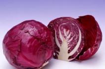 Краснокочанная капуста: полезные свойства и особенности выращивания.