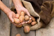Зимнее хранение картофеля