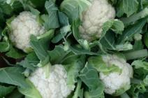 Сохраняем урожай цветной капусты на зиму по всем правилам